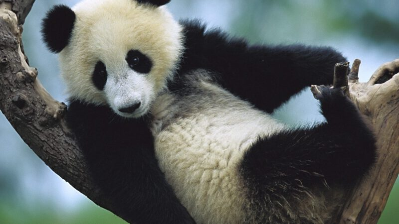 Was haben Pandabär und Gelbbauchunke gemeinsam?